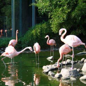 Besuch im Zoo Osnabrück