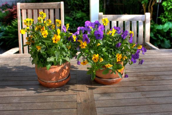 HDR Bild von einer Blume auf einem Holztisch