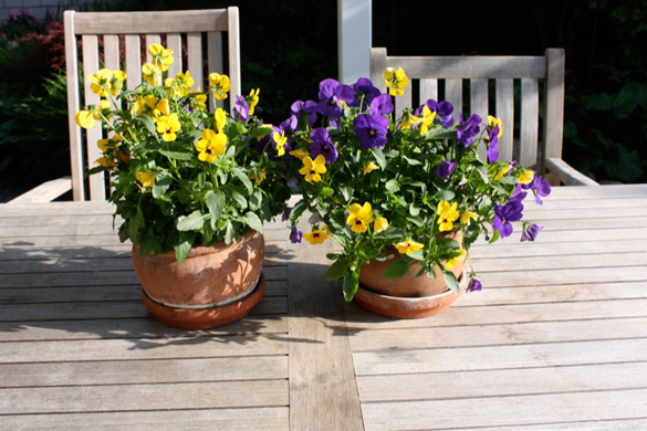 Normal belichtet Blume auf einem Holztisch
