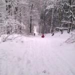 Rodeln am Haller Weg