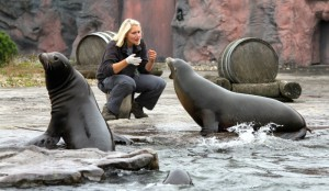 Fütterung der Seelöwen / Alaska