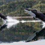 Seabreacher – Wie ein Hai…